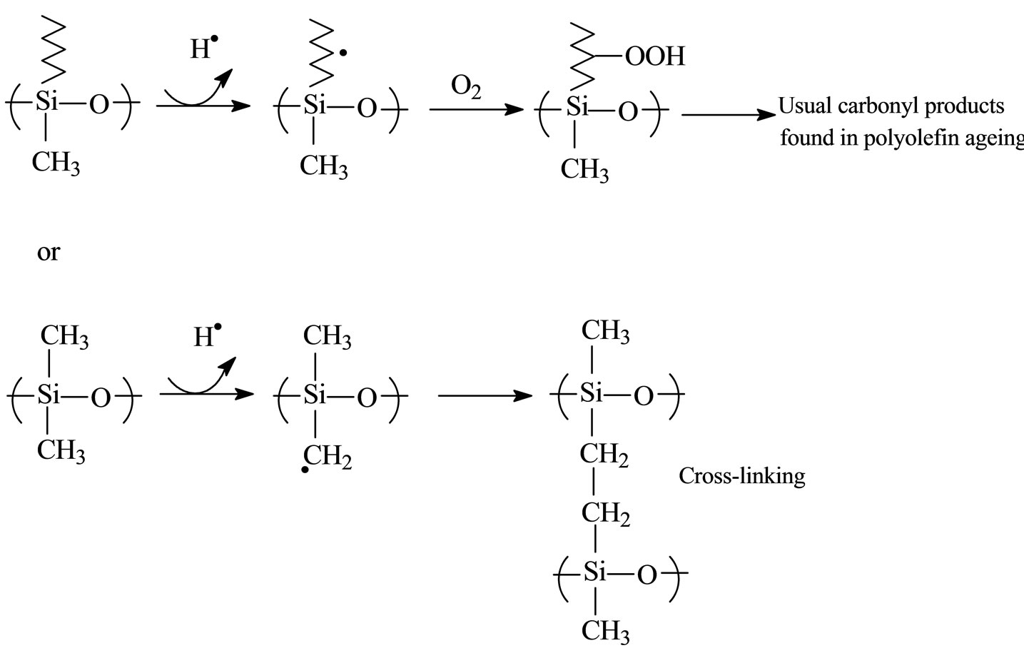 Oxidation Chain Scission And Cross Linking Studies Of