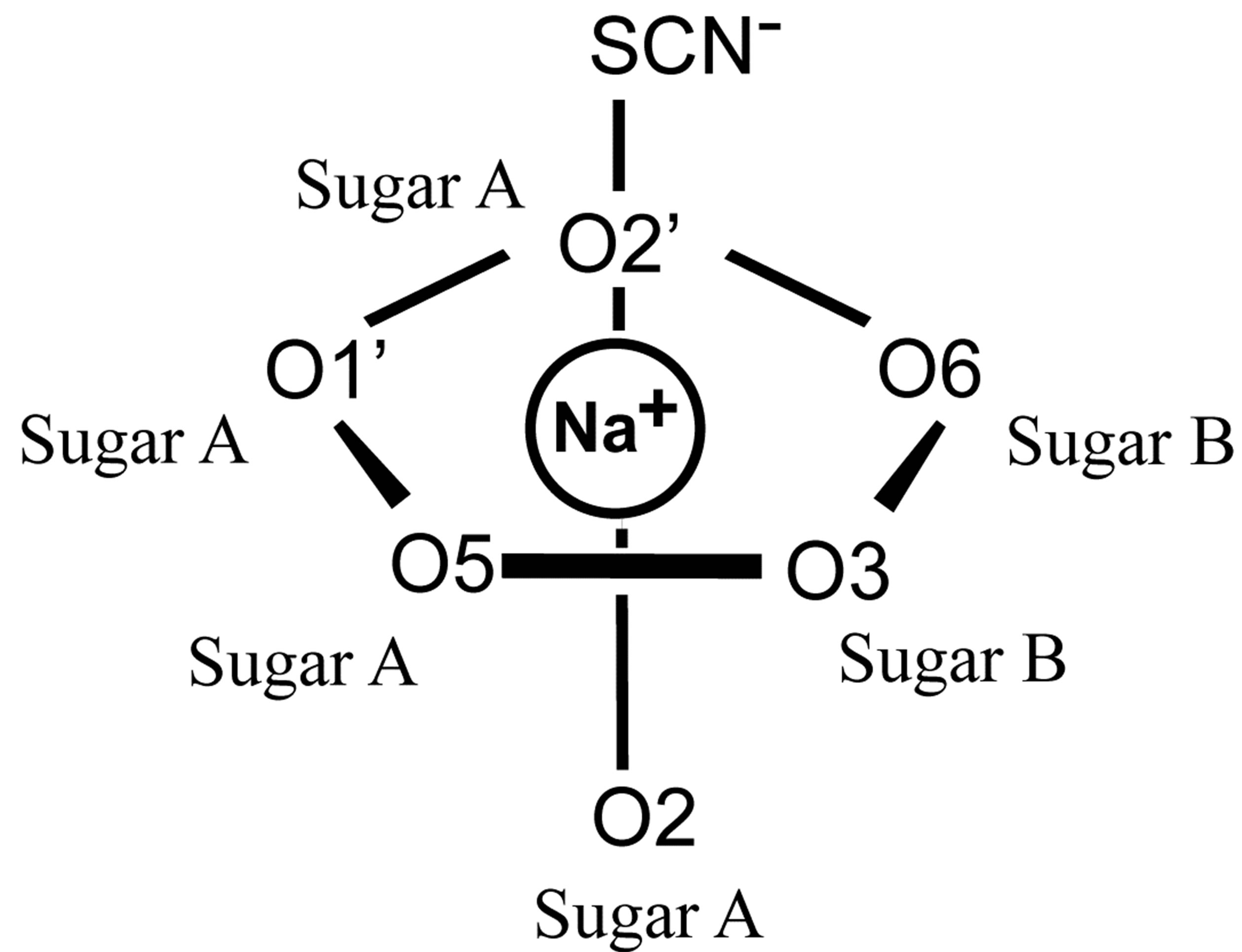 Complex formation of 16 anhydro ii maltose and sodium ions a pooptronica Gallery