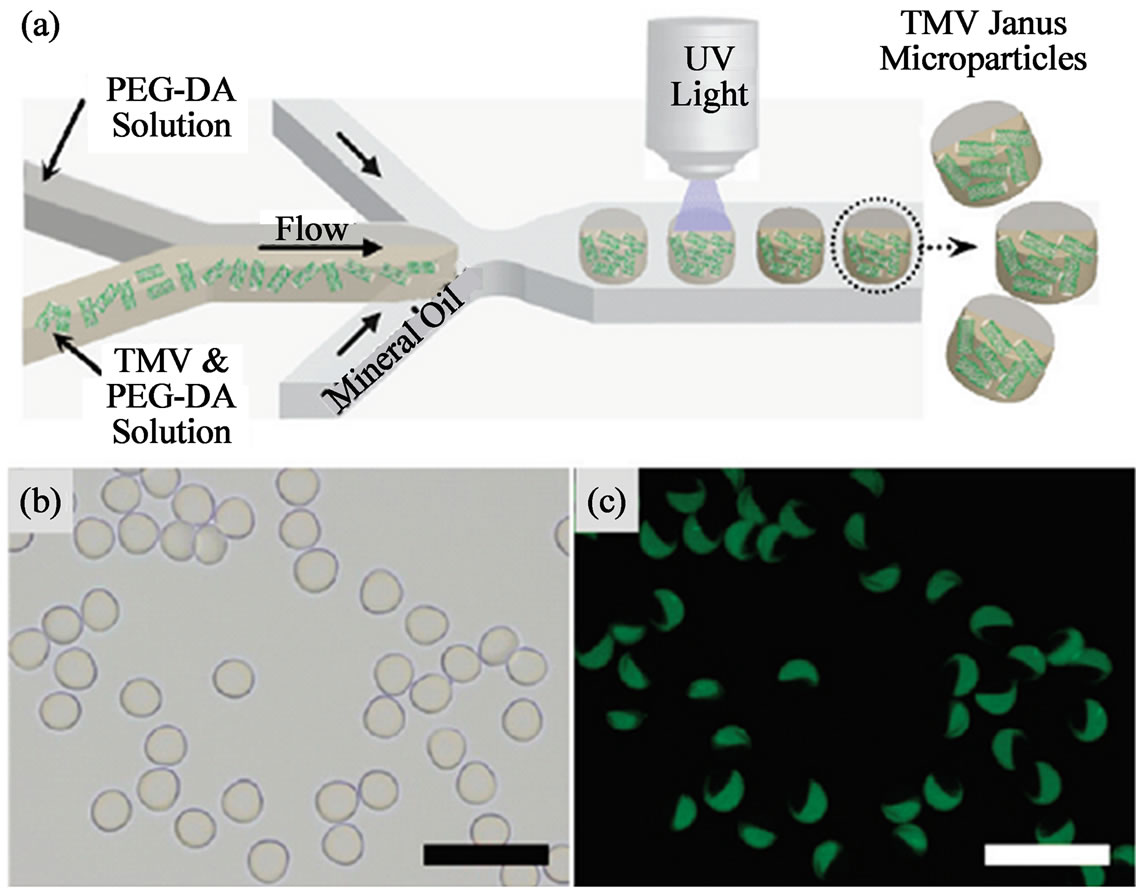 Structured Microgels Through Microfluidic Assembly And
