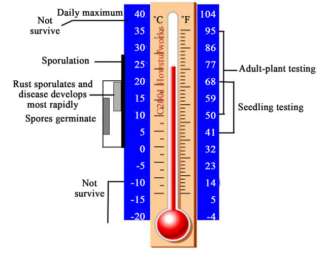 high temperature in adults