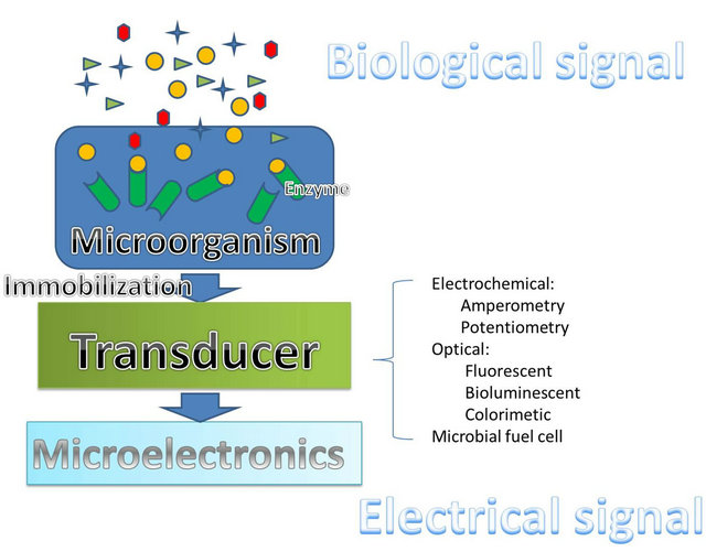 Technology and Applications of Microbial Biosensor