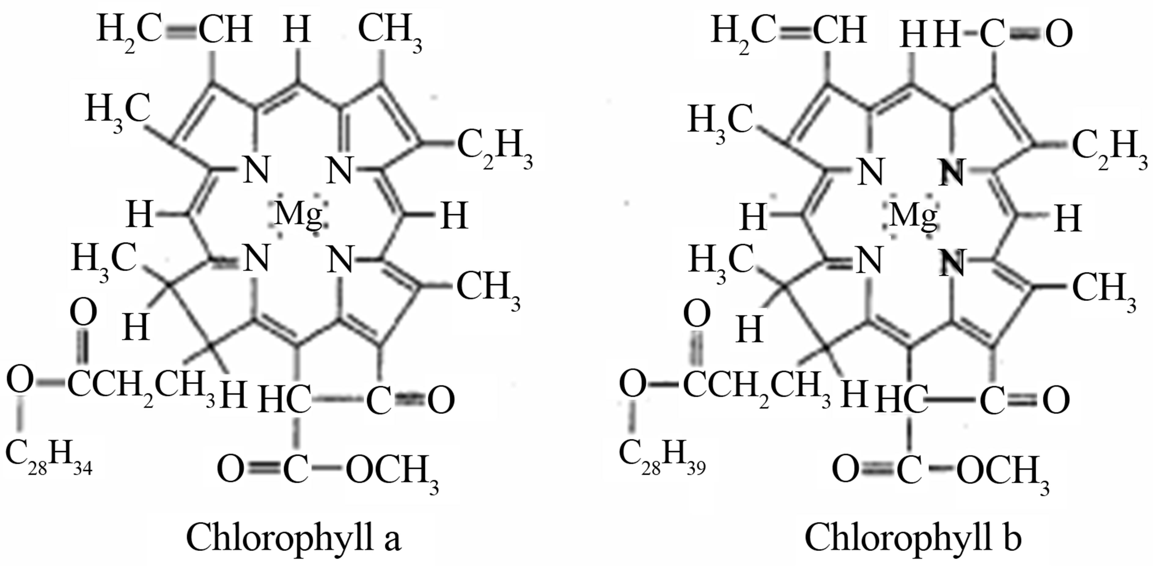 a possible realization of chlorophyll lase