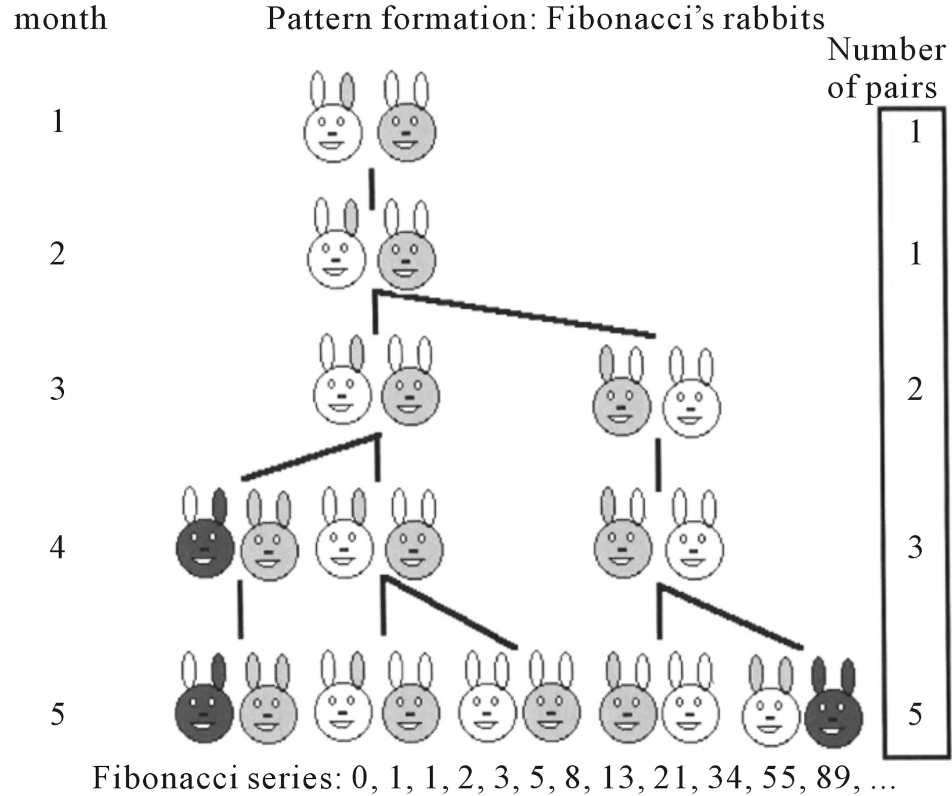 Occurrence of fibonacci numbers in development and structure of idealized diagram of the rabbit fibonacci pattern formation pooptronica