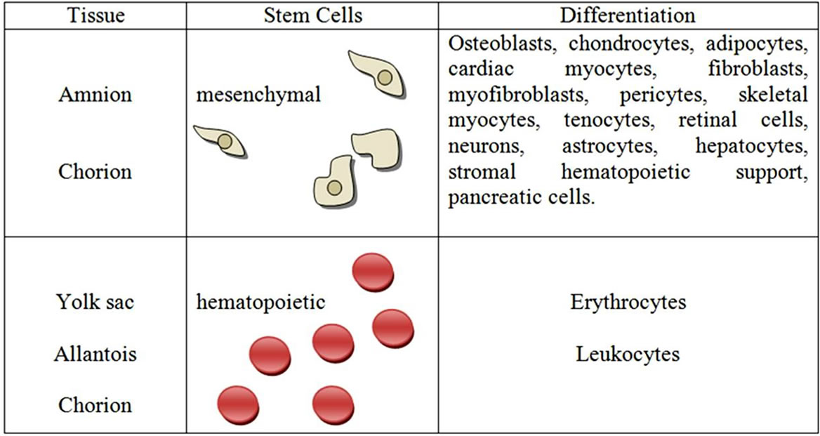 Placental tissues as sources of stem cells—Review