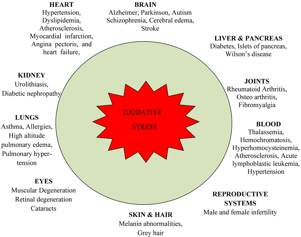 progressive ppt diagram oxidative stress and human health  oxidative stress and human health