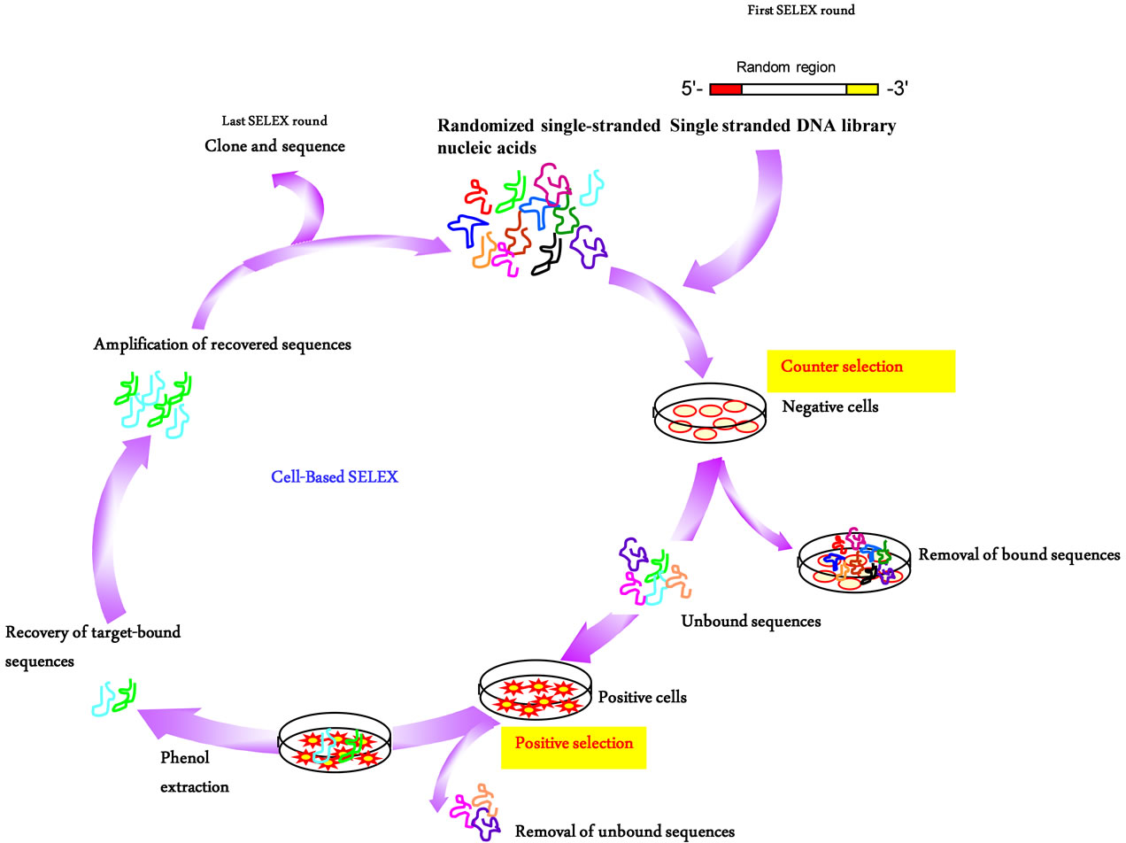 Nucleic Acid Aptamers As Potential Therapeutic And
