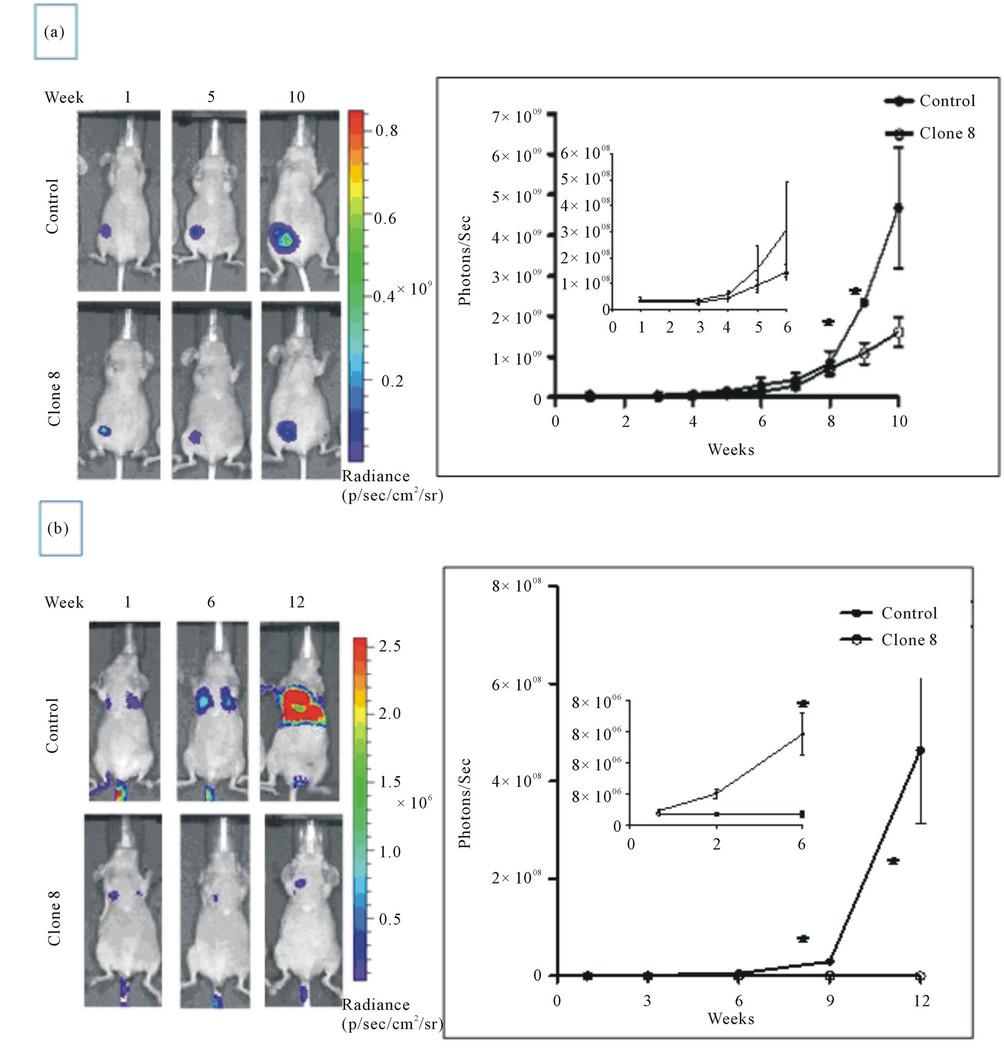 MEN4901/T-0128, a New Camptothecin Derivative