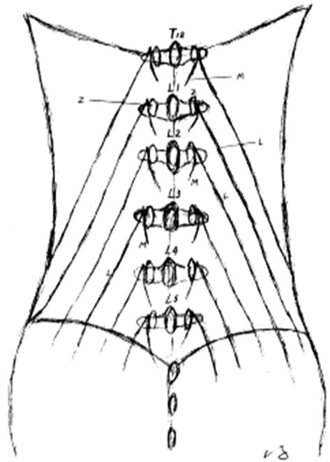 The Anatomy Of Dorsal Ramus Nerves And Its Implications In Lower