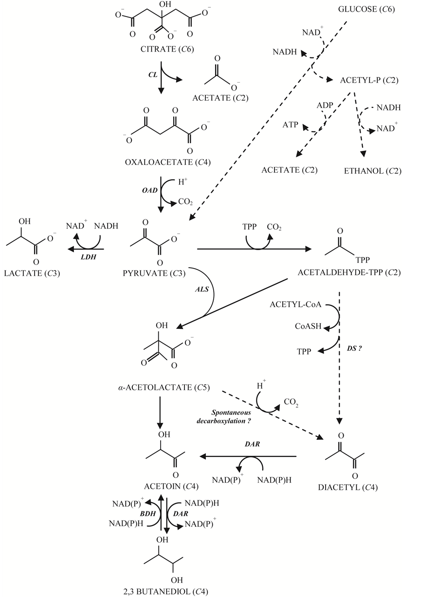 The Citrate Metabolism in Homo- and Heterofermentative LAB: A