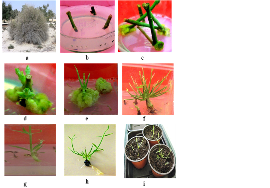 plant hormones and induction of organogenesis in vitro Therefore kinetin with combination of bap majorly influences in-vitro organogenesis in tomato plant  induction from plant tissue culture  hormones - bap.
