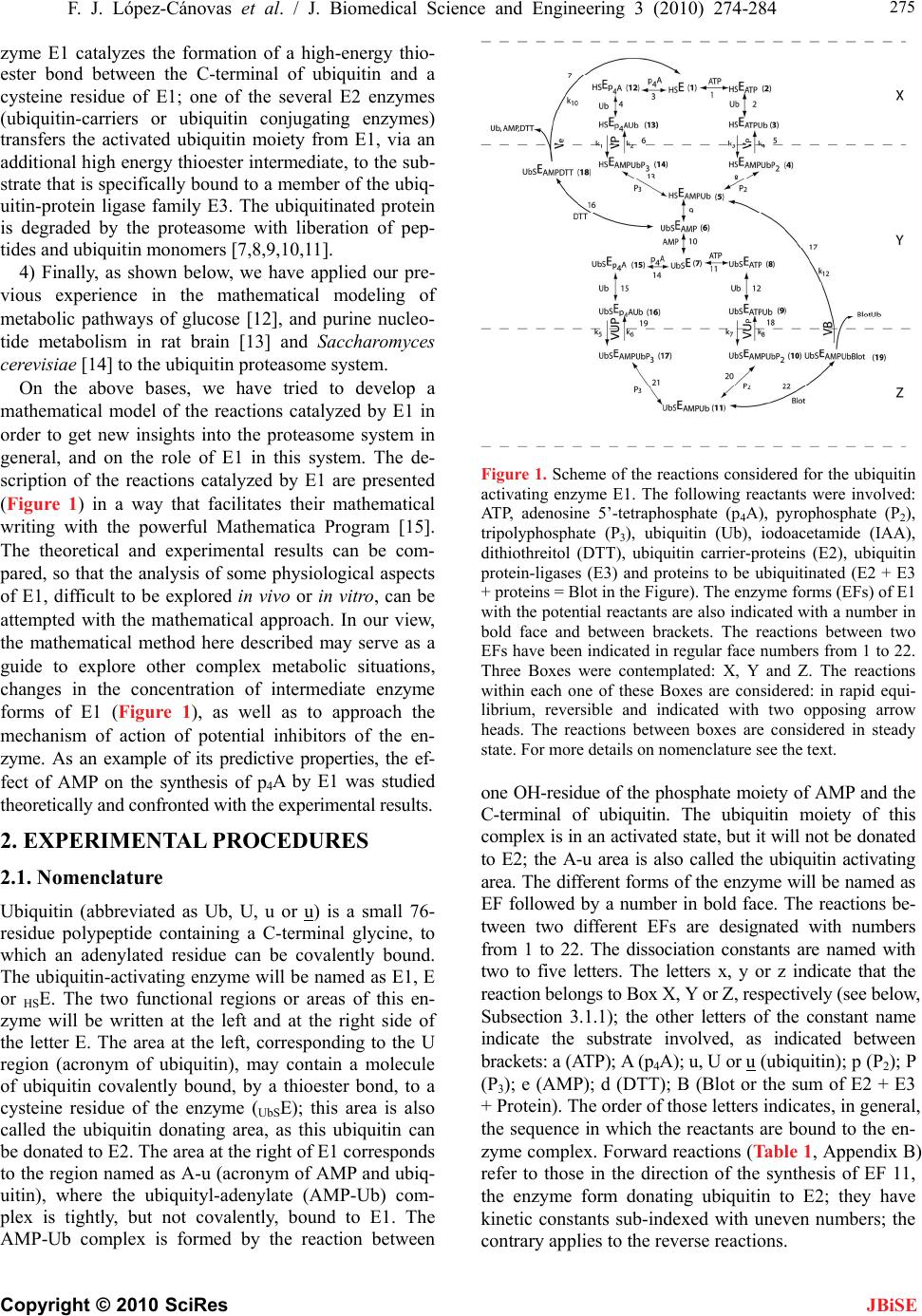 thesis on ubiquitin Fluorescent reporters for the ubiquitin-proteasome system (2005) essays biochem 41(1) possible role of the ubiquitin-proteasome system in neurodegenerative.