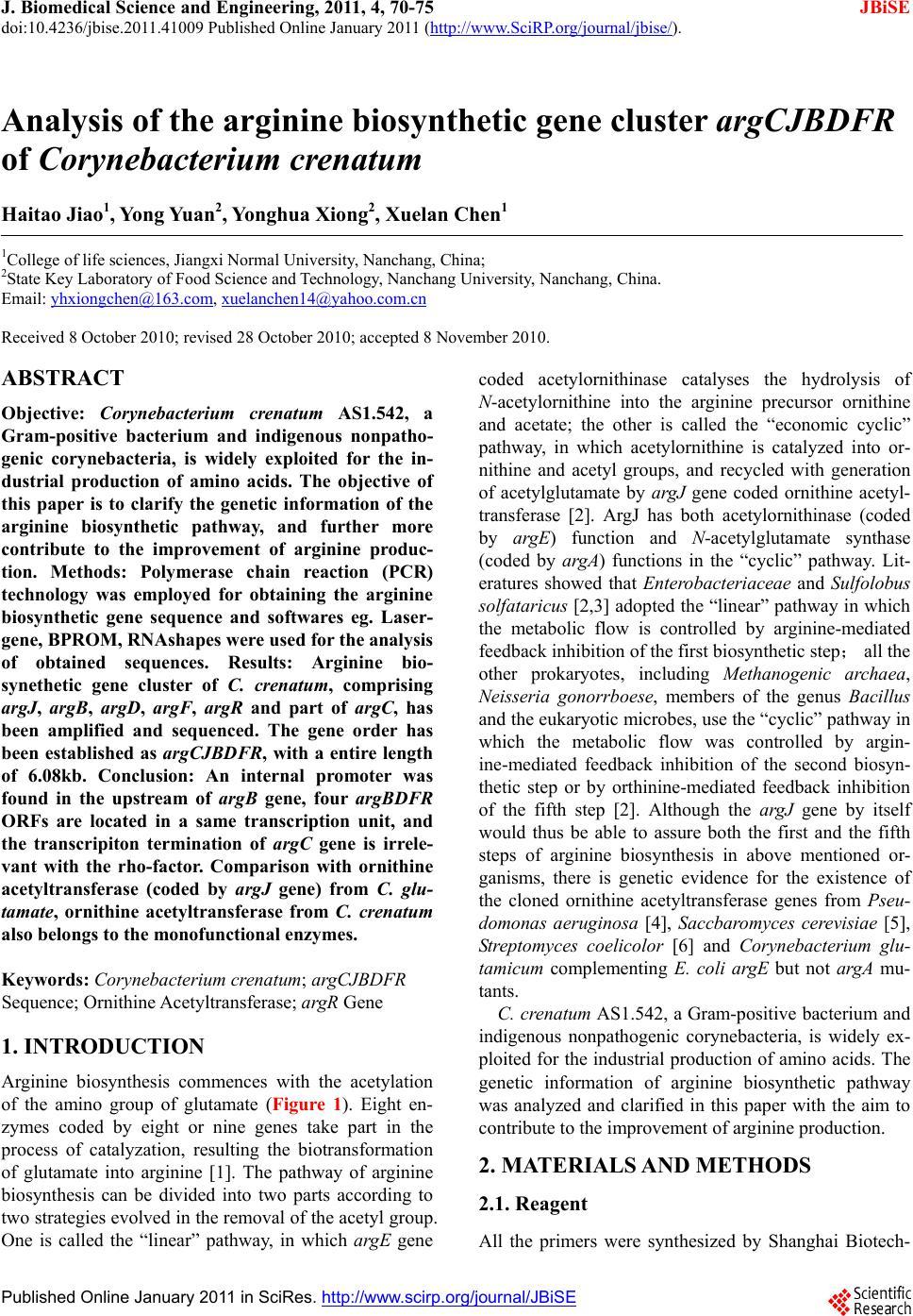 Analysis Of The Arginine Biosynthetic Gene Cluster Argcjbdfr One Nine Sequencer Corynebacterium Crenatum